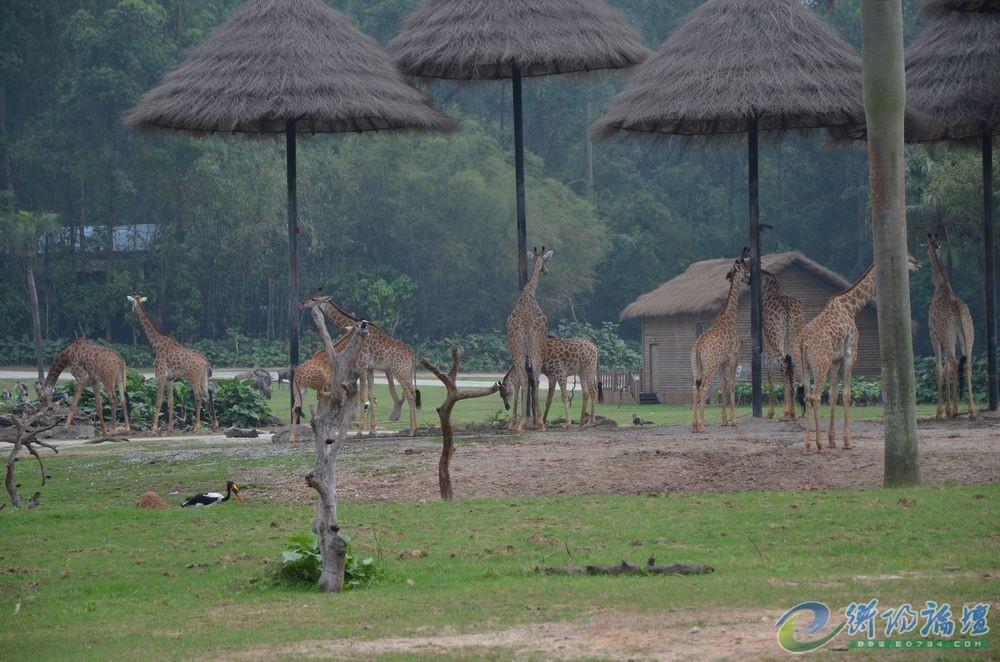 孤鸿长隆野生动物园游玩